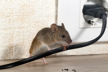 Pest Control in Swanley, Hextable, Crockenhill, BR8. Call Now! 020 8166 9746