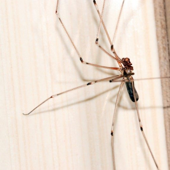 Spiders, Pest Control in Swanley, Hextable, Crockenhill, BR8. Call Now! 020 8166 9746
